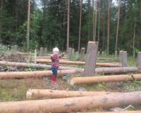 Скоро вместо пеньков на месте срубленного леса появятся дачные участки. Покупатели уже есть. Фото Натальи Трофимовой