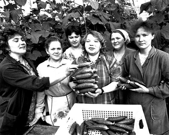 Расцвет предприятия — начало 80-х, когда «Тепличное» снабжает витаминной продукцией города области. Фото Валентина Капустина