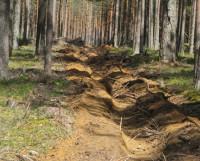 Вот так должна выглядеть идеальная противопожарная полоса. Фото с сайта yakutia.info