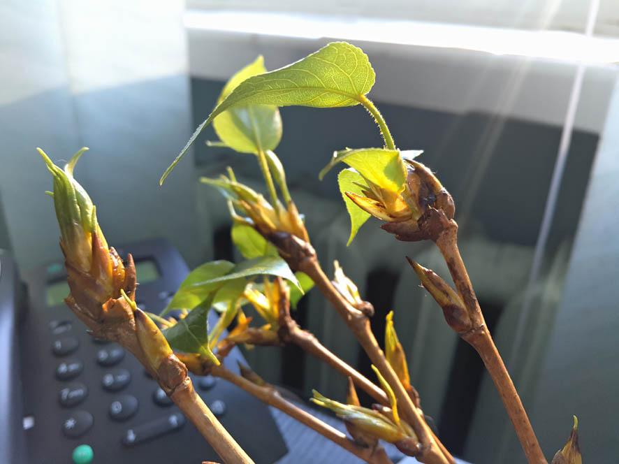 Весна на столе