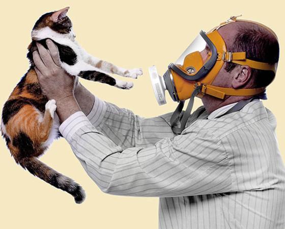 аллергия на конкретное животное