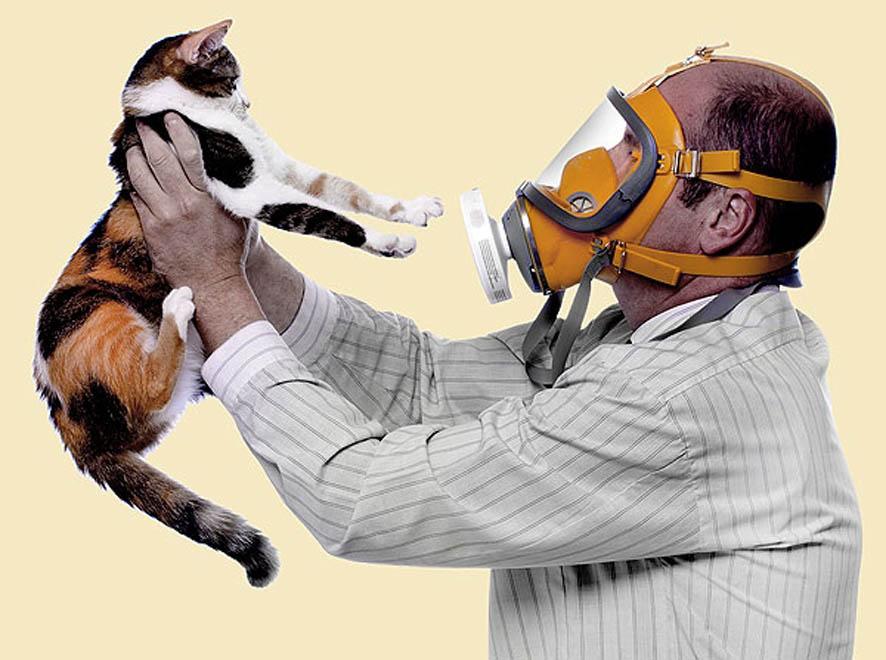 Аллергия. Сохранить и мужа, и кота