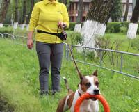 Тина Соболева с одной из любимых воспитанниц — трёхлетним стаффордширским терьером Пеппой. Фото автора