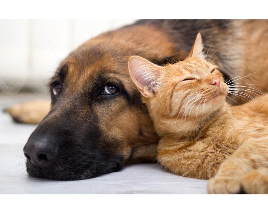 Котики против собак