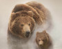 animal-bear-195437-m