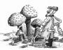 грибы-m
