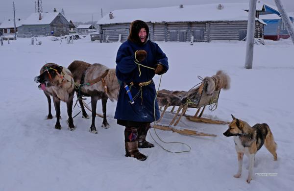 Самого настоящего ненца мы встретили в деревне Сояны: он приехал в магазин на оленях, в сопровождении местных собак.
